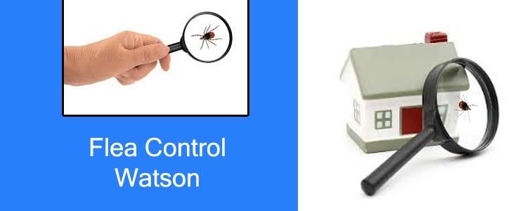 Flea Control Watson