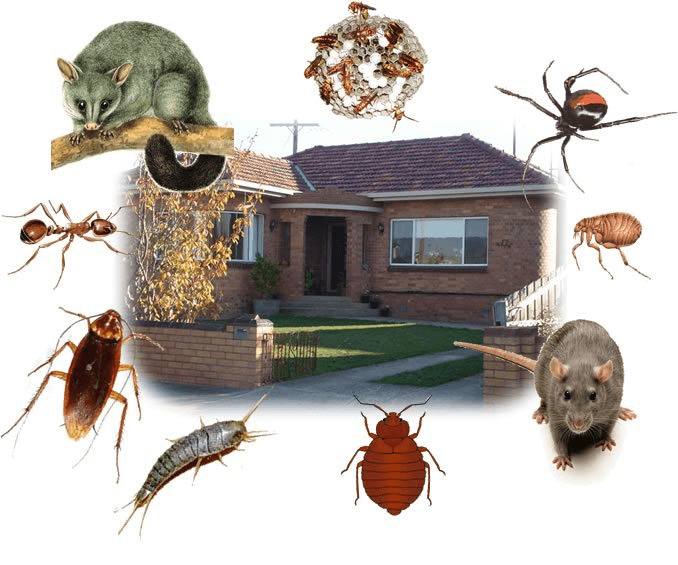 pest control in watson