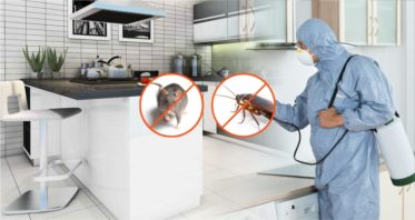 Pest Control Watson